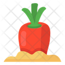 Carrot Growing Carrot Planting Kitchen Garden Icon