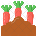 Carrot Plantation Icon
