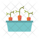 Carrots Raised Bed Vegetaables Icon