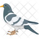 Cartoon Pigeon Feather Creature Fowl Icon