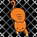 Cat Play Animal Icon