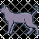 Cat Cheetah Cute Icon