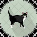 Cat Vector Illustration Icon