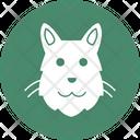 Cat Feline House Cat Icon
