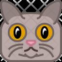 Cat Puss Tomcat Icon