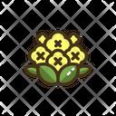 Cauliflower Vegatbale Vegatbales Icon