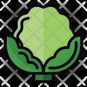 Cauliflower Health Vegetarian Icon