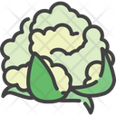 Cauliflower Food Healthy Icon