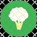 Cauliflower Broccoli Cabbage Icon