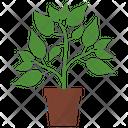 Cayenne Pepper Plant Icon