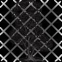Cedar Tree Forest Tree Icon