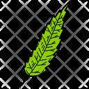 Cedar Leaf Leaf Foliage Icon