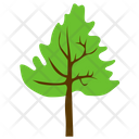 Cedar Tree Icon