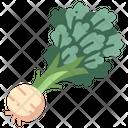 Celeriac Vegetable Healthy Icon