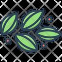 Celery Lettuce Pascal Celery Icon