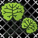 Centella Icon