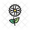 Chamomile Flower Aromatherapy Icon