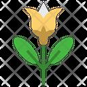 Chamomile Flower Herbal Icon