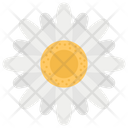 Chamomile Flower Fragrance Daisy Flower Icon