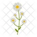 Chamomile flowers Icon