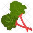 Chard Vegetable Green Icon