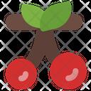 Cherry Spring Fruit Icon