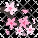 Icherry Blossom Cherry Blossom Cherry Icon