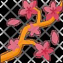 Cherry Blossom Sakura Flower Icon