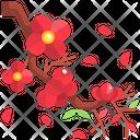 Cherry Blossom Cherry Blossom Icon