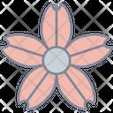 Cherry Blossom Sakura Sakura Blossom Icon