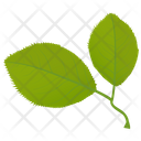 Cherry Leaves Icon