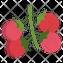 Cherry Tomatos Icon