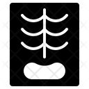Chest Ray Lung Icon
