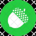 Chestnut Acorn Oak Icon