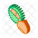 Chestnut Icon
