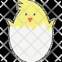 Chick Chicken Bird Icon