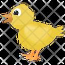 Chick Feather Creature Farm Animal Icon
