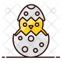 Chick Easter Eggs Chicken Icon