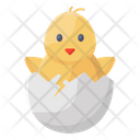 Chick Baby Chick Poultry Chick Icon