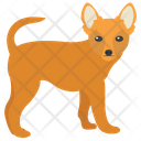 Chihuahua Dog Breeds Dog Species Icon