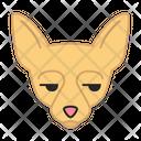 Chihuahua Dog Unamused Icon