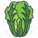 Chinese Cabbage Icon
