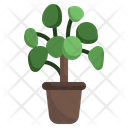 Chinese Money Luck Tree Icon