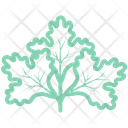Chinese Parsley Icon