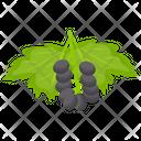 Chokeberry Icon