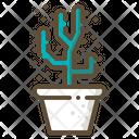 Cholla cactus Icon
