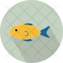 Chordata Freshwater Goldfish Icon