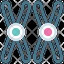 CHROMOSOME Icon