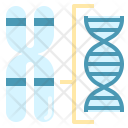 Chromosome Structure Gene Icon