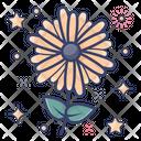 Blossom Chrysanthemum Flower Icon